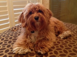 angela neels dog staff member in winter park